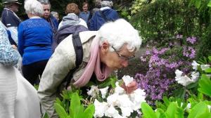 Rododendronrondleiding op Moederdag, zondag 13 mei om 14.00 uur