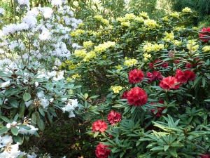 Rododendronrondleiding en high tea