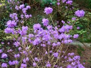 Midwinter in bloei