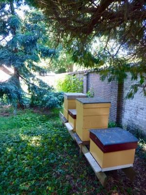 Boombergse bijtjes zijn druk